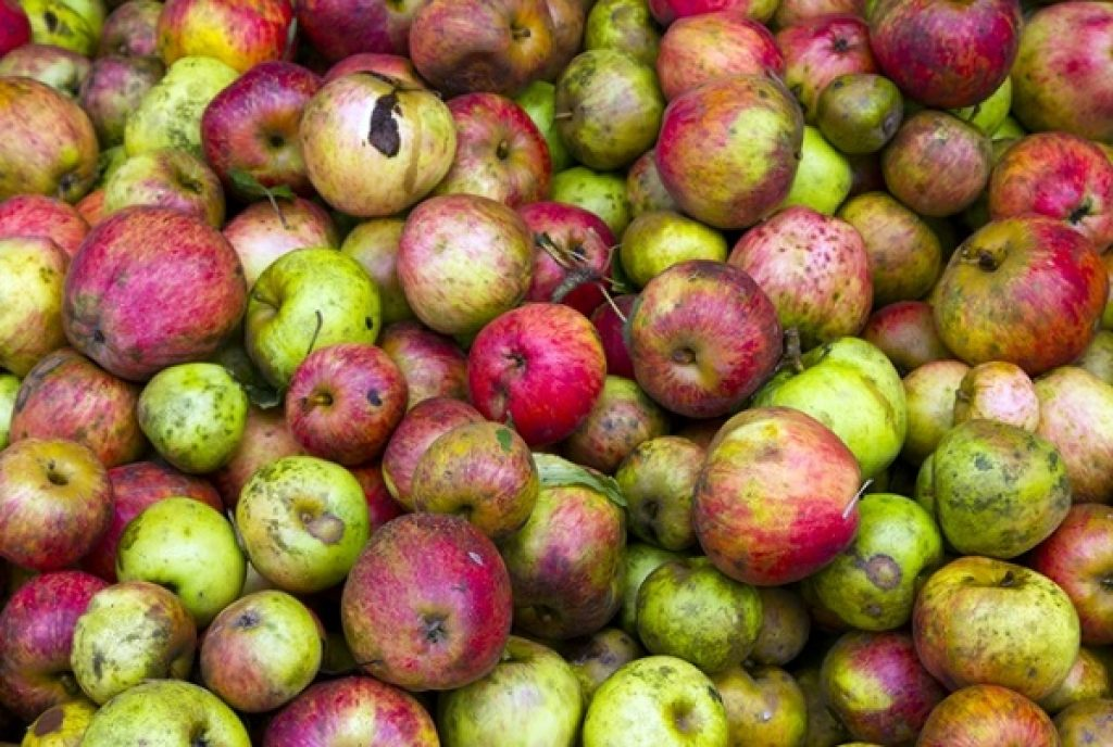 apples-from-the-cider-shire