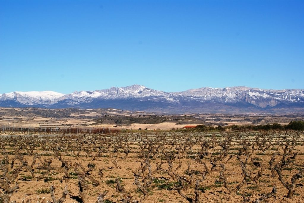 vineyards in logrono in the winter overlooking snow-capped mountains