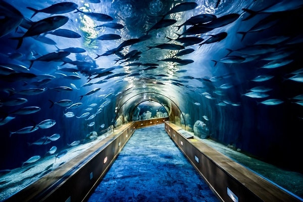 Valencia Aquarium Tickets